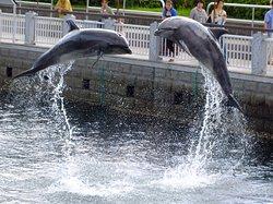 イルカのジャンプでお出迎え