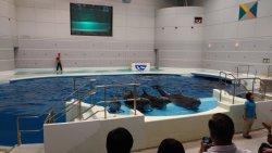 小而美的水族館