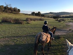 Uncle Nev's Trail Rides