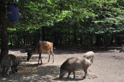 Wild- & Erlebnispark Daun