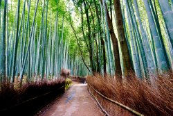 Bamboo Forest Street