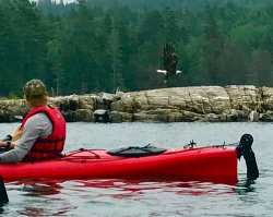 Maine State Sea Kayak