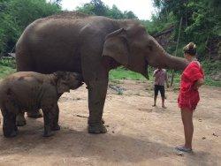 Bamboo Elephant Family Care