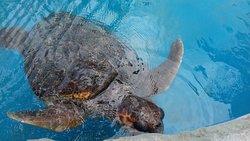 Museu ao Céu Aberto da Tartaruga Marinha