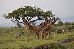 Juma Safari Kenya