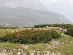 Vegetation in the mountains