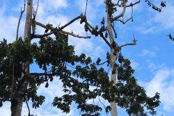 Pemba Flying Fox Forest