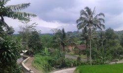 jalan menuju villa bagus dan sudah di aspal, di sepanjang jalan terbentang persawahan dan kebun teh, sangat menyejukan