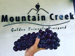 Mountain Creek Vineyard