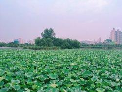 Mansuk Park