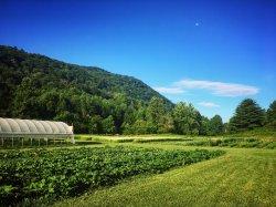 Timpson Creek Farm