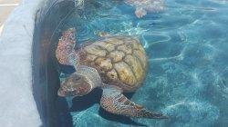 Centro de Recuperacion y Conservacion de Tortugas Marinas de Morro Jable