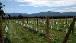 Brix and Columns Vineyards