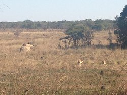 Impala, Baboons and maybe a wart-hog too