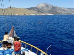 Friederike Boat Daily Cruises