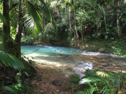 Port Douglas Tropical Trips