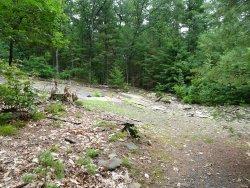 Nash's Dinosaur Track Quarry