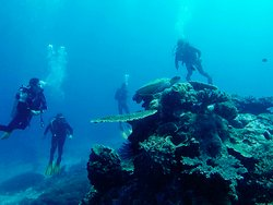 Somer Dive Komodo