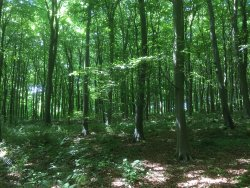 Eartham Wood