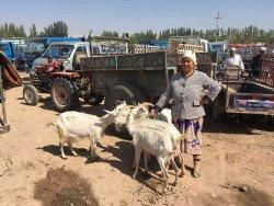 喀什葛尔牲畜市场