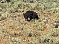 Yellowstone Safari Company