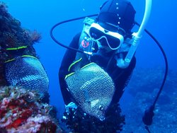 Crown Divers