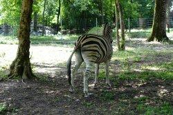 Gradina Zoologica Timisoara Padurea Verde