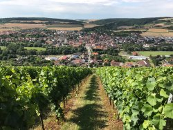 Weingaertner Markelsheim