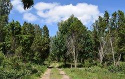 Eneskogen