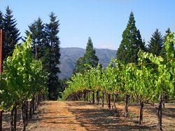 South Bay Wine Tours