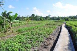 Side By Side Organic Farm