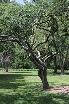 An interesting tree!
