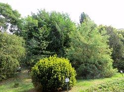Ботанический сад им. А.В. Фомина