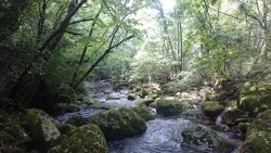 清流の森を流れる田の原川(筑後川の源流)