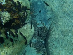 underwater fhoto