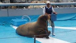 Oita Marine Palace Aquarium Umitamago
