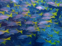 Santo Antao Scuba Diving