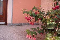 Fuchsien aller Farben und Formen, beschildert und dokumentiert
