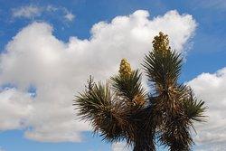 Arthur B. Ripley Desert Woodland State Park