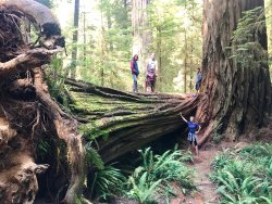 Boy Scout Big Tree Trail