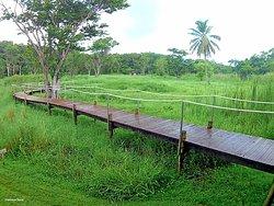 TAONABA Maison de la mangrove