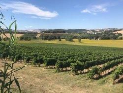Conte Leopardi Wines
