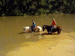 Rancho Cavalo Mania