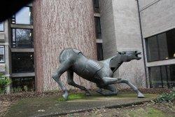 Vallend paard
