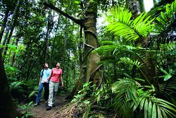 Active Tropics Explorer - Day Tours