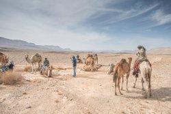 Ben Midbar Camel Tours