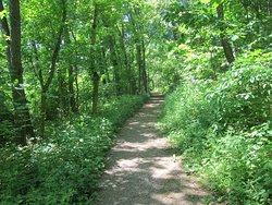 WVU Core Arboretum