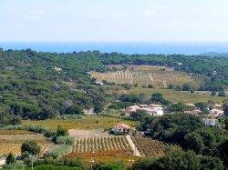 Wine Tours Provence & Riviera