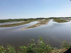 NABU-Wasservogelreservat Wallnau