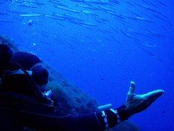 Linosa Blu Diving